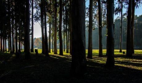 sombra, amanecer, paisaje, madera, árbol, bosque, otoño, hierba