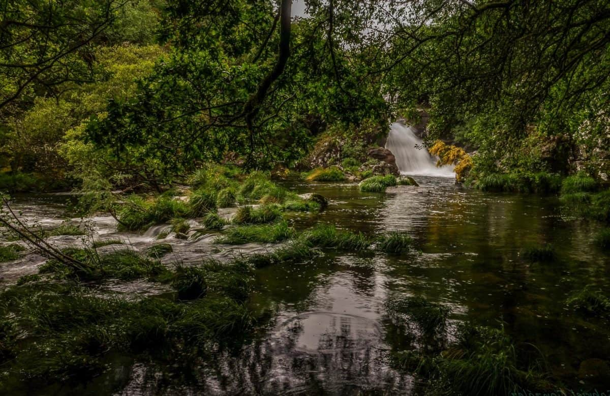 waterfall, landscape, water, tree, river, nature, wood, swamp, forest