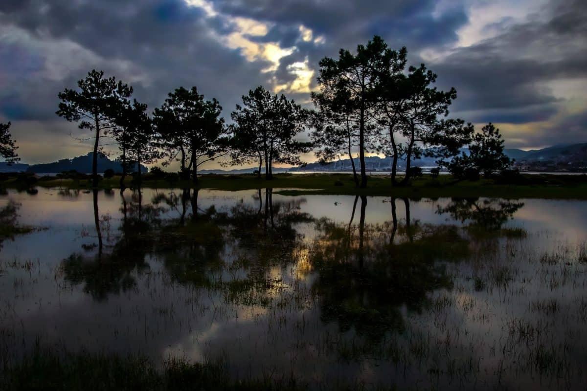island, dawn, water, sunset, tree, reflection, lake, landscape, nature
