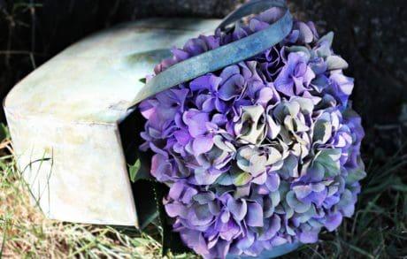 bloem, Tuin, blad, natuur, plant, gras