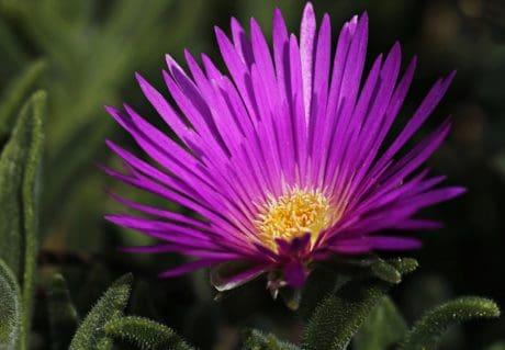 list, cvijet, vrt, ljeto, priroda, latica, biljka, Blossom