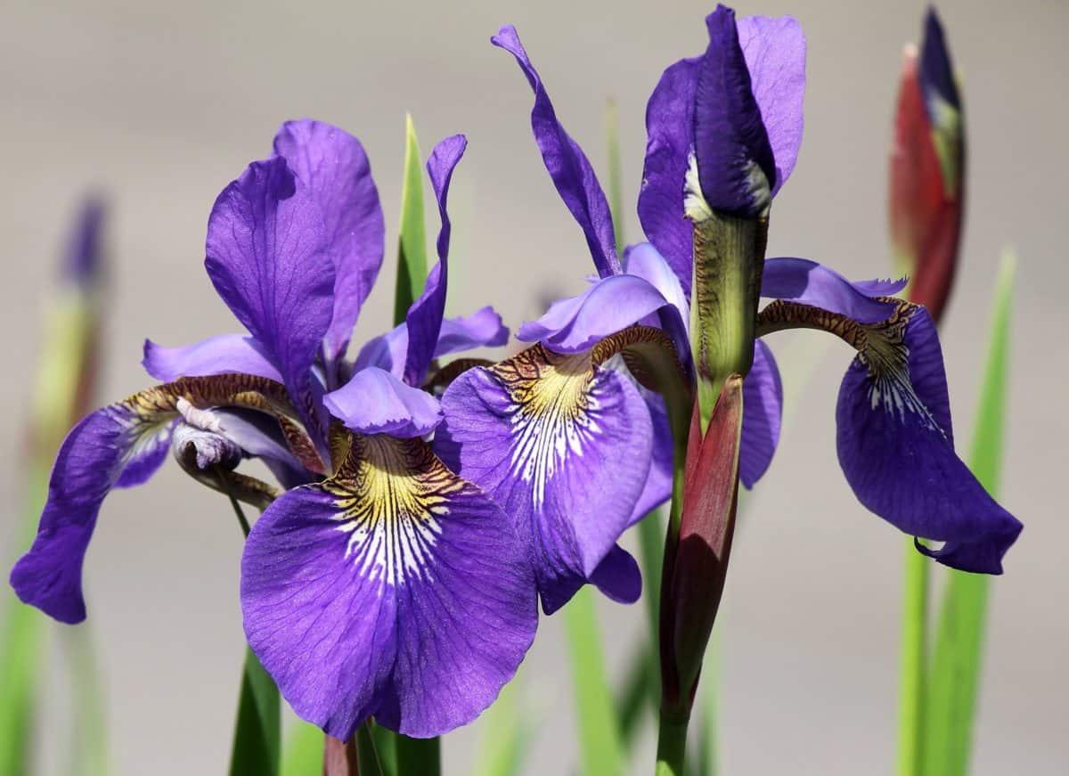 flower, leaf, nature, garden, summer, plant, petal