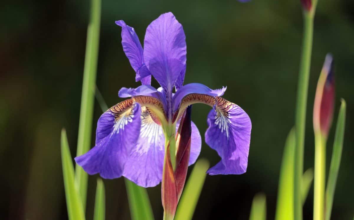 green grass, violet color, plant, flower, garden, petal, blossom