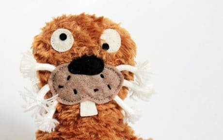 teddy bear, plush toy, childhood, decoration, object, brown