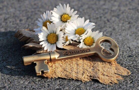 umbra, beton, daisy, încă de viaţă, cheia, floare, copac, textura, plante