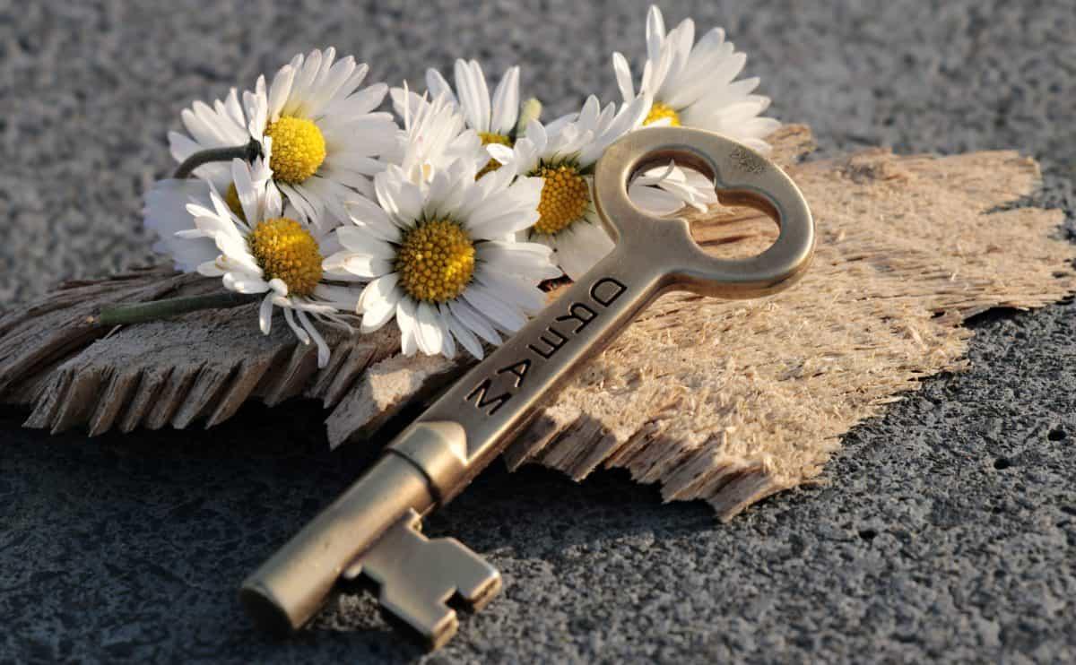 still life, concrete, flower, key, wood, plant, petal, metal, summer