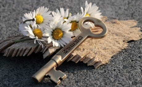 still life, concrete, flower, key, wood, plant, petal, metal, summer