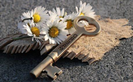 Натюрморт, бетон, цвете, ключ, дърво, растение, венчелистче, метал, лято