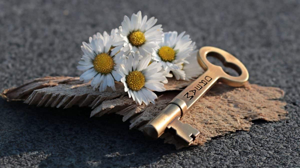 flower, key, concrete, still life, plant, wood, petal, metal