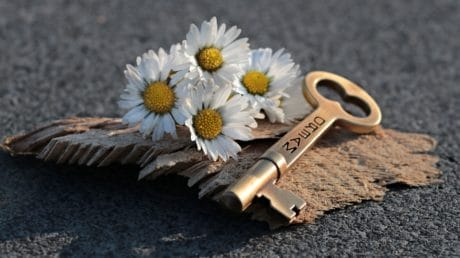 flower, key, concrete, still life, plant, wood, petal, metal