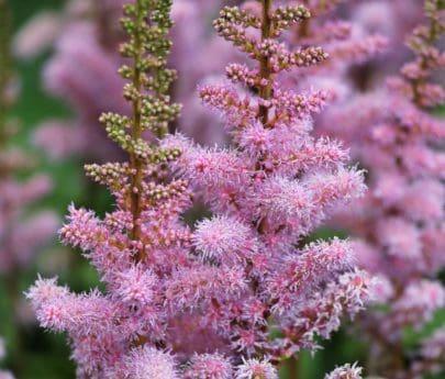 hoja, flor, verano, jardín, naturaleza, árbol, color de rosa