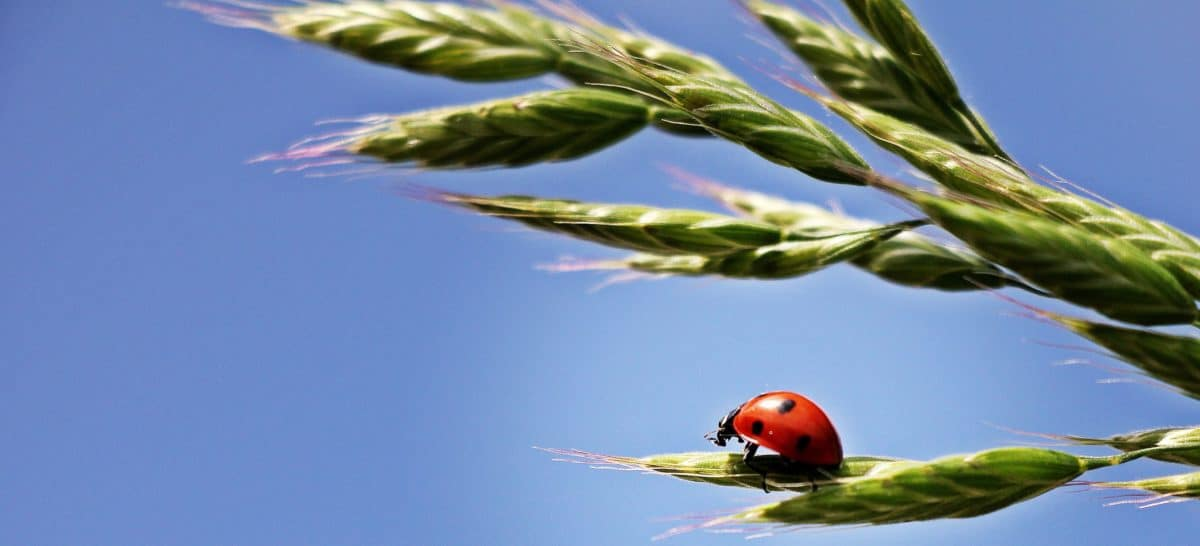 summer, nature, ladybug, blue sky, beetle, insect, arthropod, bug, plant