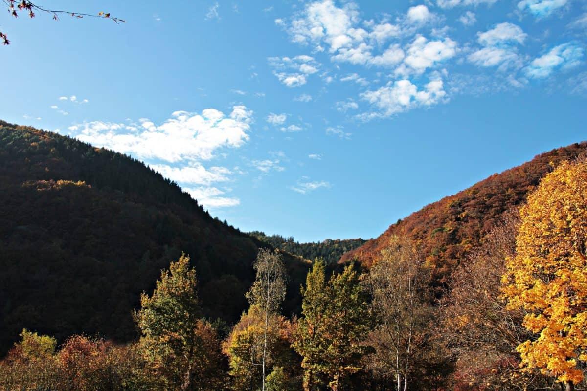 nature, ciel, bois, montagne, arbre, paysage, vallée, forêt