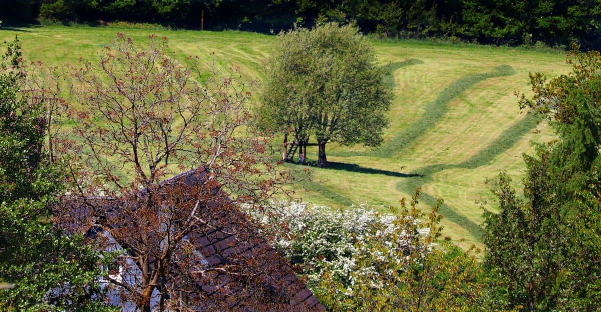 paisagem, agricultura, campo, árvore, natureza, planta, florestais, grama, ao ar livre, casa