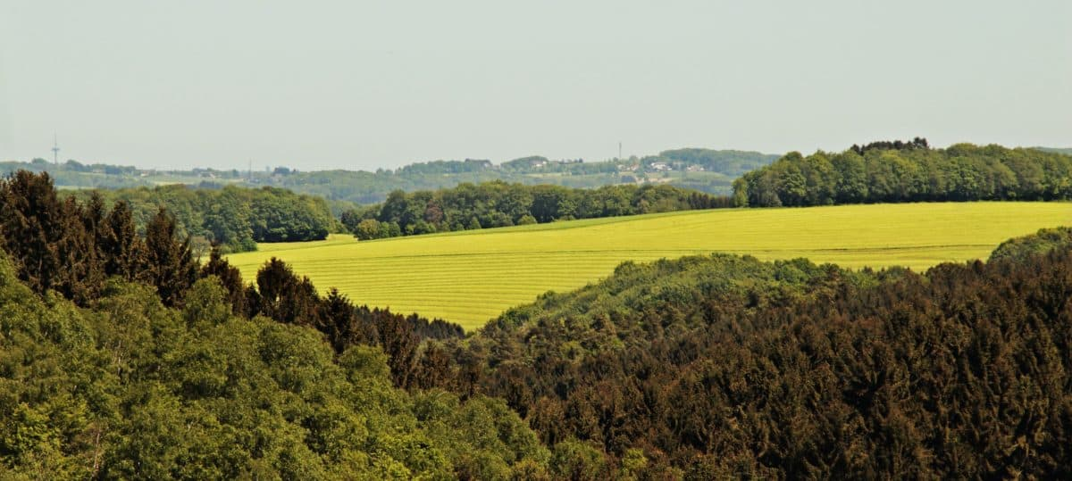 tree, nature, agriculture, countryside, landscape, agriculture, outdoor, grass, sky
