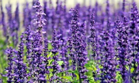 l'été, l'agriculture, campagne, champ, herbe, nature, flore, fleur, plante