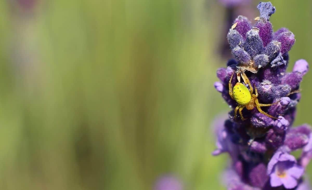 spider, nature, flower, summer, plant, garden, insect, daylight
