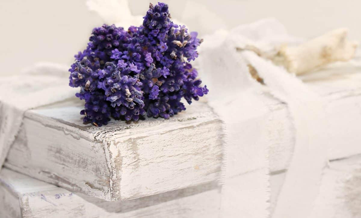 cvijet, knjige, umjetnosti, biljka, mrtva priroda, ukras, bijela, ukras