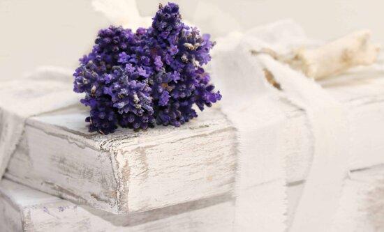 floare, carte, arta, plante, încă de viaţă, decorare, alb, decor