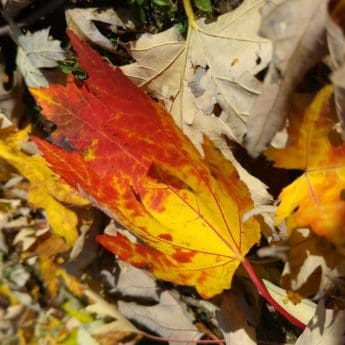 autumn, wood, leaf, nature, yellow leaves