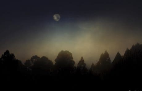 night, moonlight, tree, moon, fog, sunset, landscape, silhouette, sky, dawn