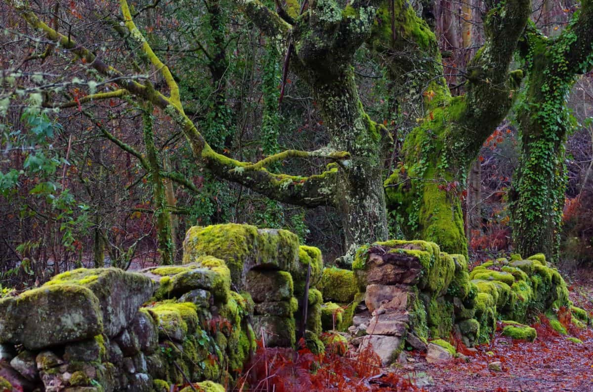 stone wall, lichen, national park, moss, tree, wood, landscape, nature, plant, forest