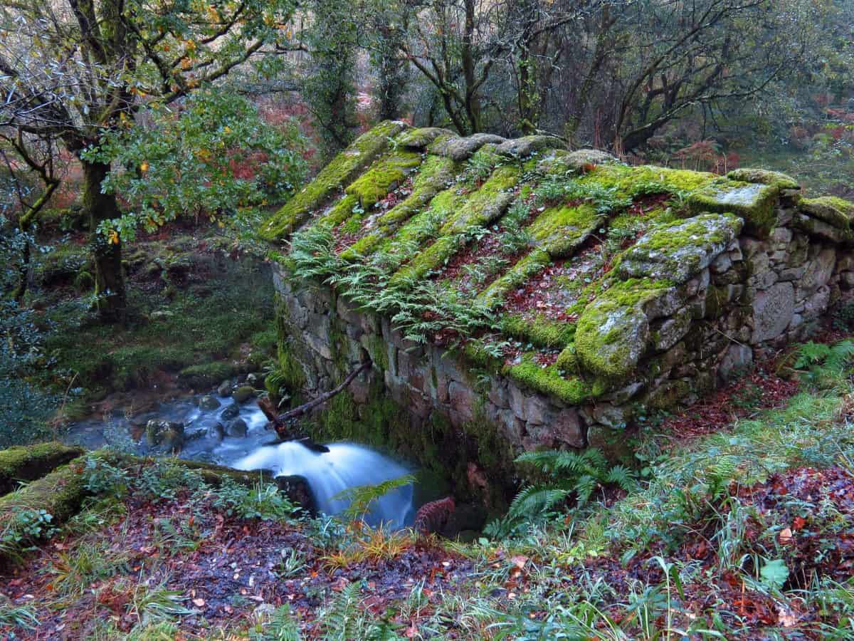 leaf, tree, landscape, moss, environment, water, nature, wood