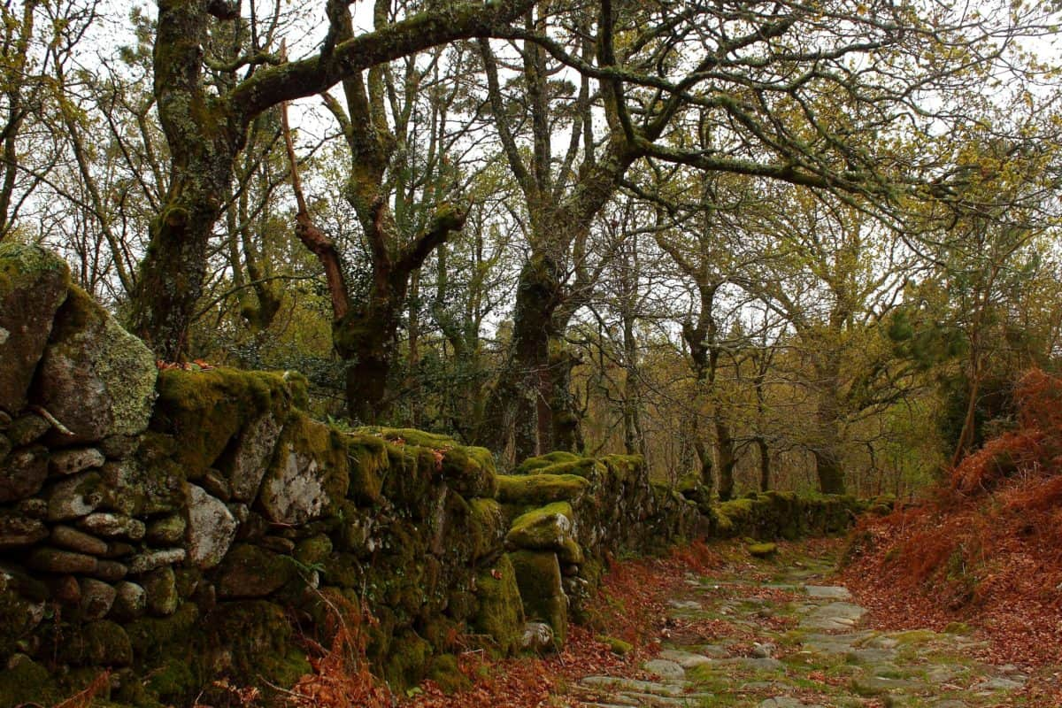 tree, stone wall, lichen, national park, landscape, nature, leaf, wood, environment, forest