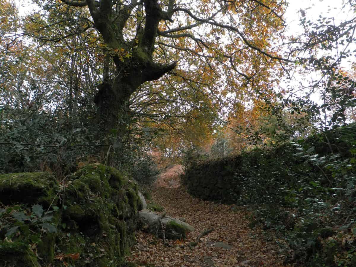 landscape, leaf, wood, nature, tree, forest, outdoor, plant