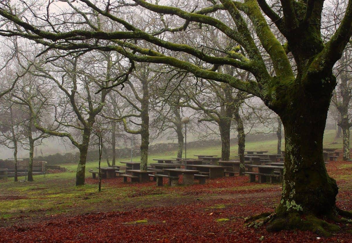 wood, national park, branch, leaf, nature, landscape, tree, forest, autumn