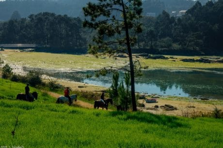 国立公園、馬、草地、農業、木、水、日光、風景