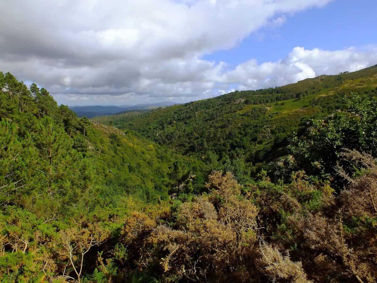 blue sky, landscape, nature, mountain, wood, tree, wilderness
