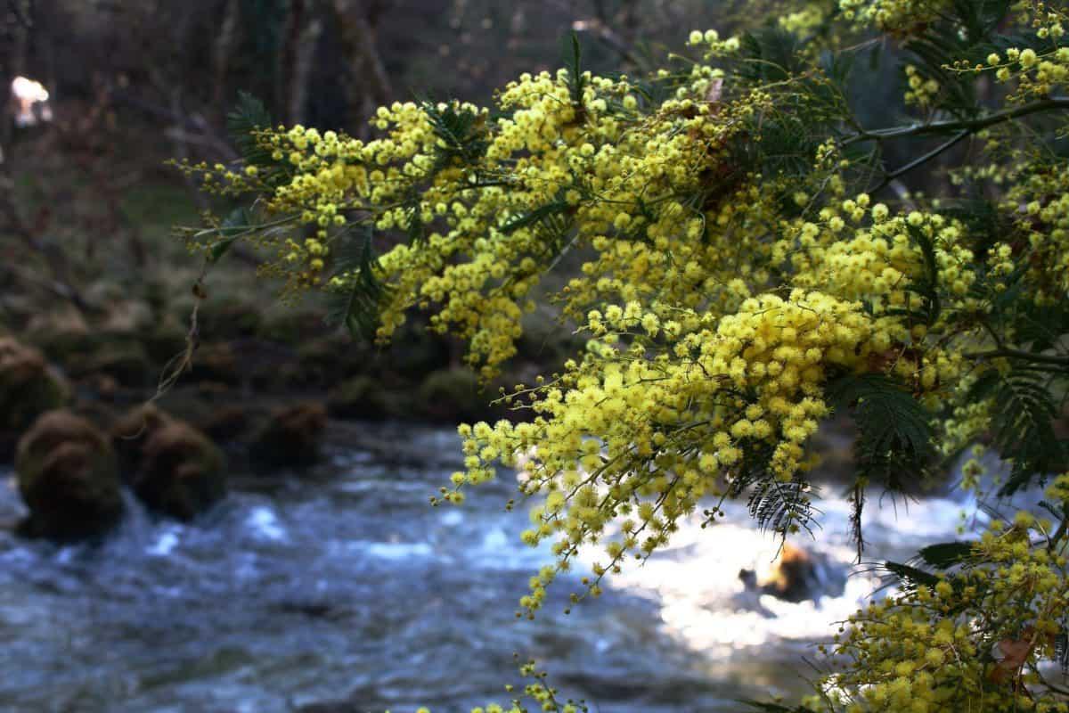 nature, tree, leaf, water, plant, forest, landscape, autumn
