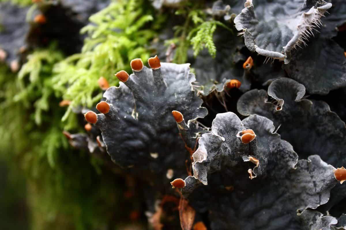 mushroom, fungus, nature, moss, lichen, ecology, environment