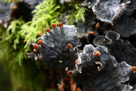 mushroom, fungus, nature, moss, lichen, ecology, environment