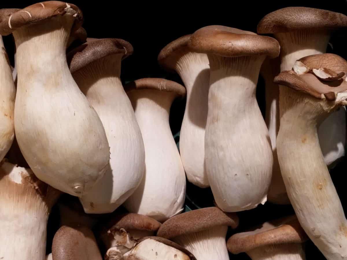 champignon, mushroom, wood, fungus, food, nature, organic