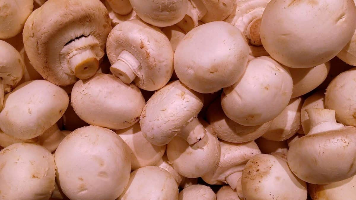 white champignon, organic, food, nutrition, vegetable, onion
