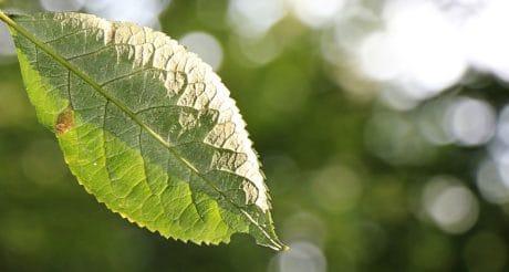 natuur, groen blad, Branch, daglicht, buiten, zonneschijn, boom, plant, milieu, Tuin