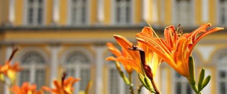 lily, flower, city, garden, petal, building, plant