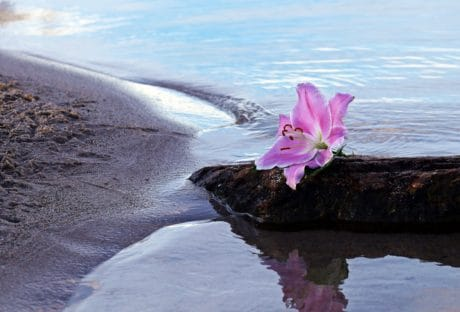вода, бряг, пясък, море, цвете, отражение, залив, плаж, природа