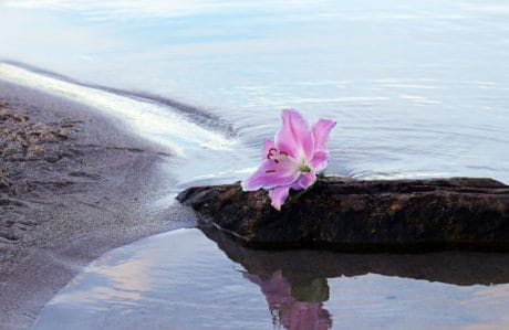 beach, water, seashore, sea, nature, aquatic, flower