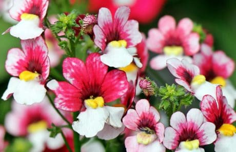 flower, summer, leaf, nature, garden, plant