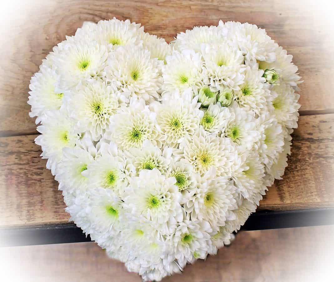 природа, квітка, серце, Пелюстка, прикраса, рослина, любов
