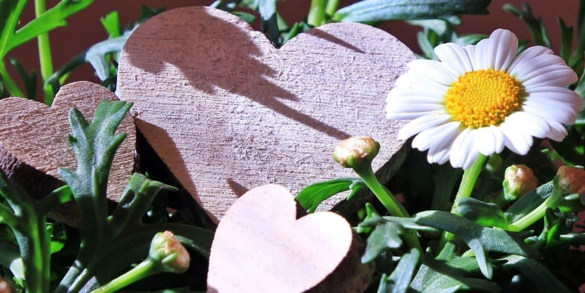 flower, leaf, nature, plant, heart, decoration