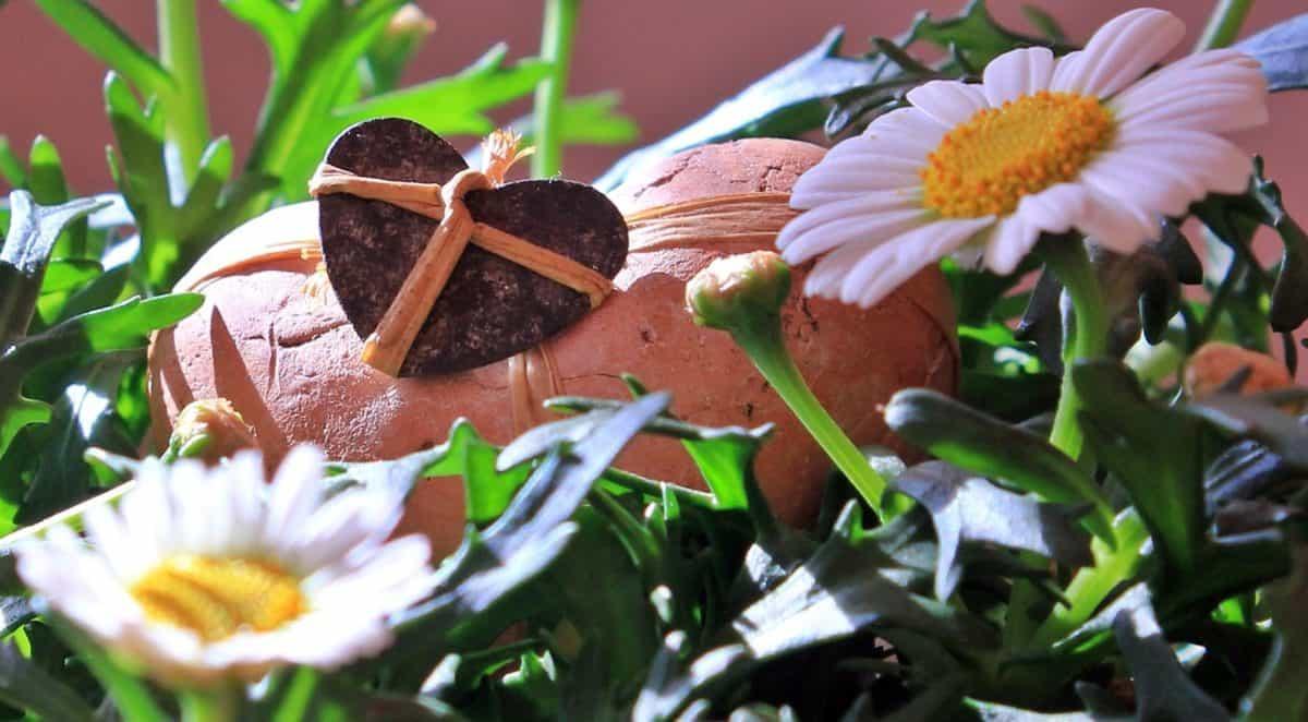 hoja, flor, verano, naturaleza, planta, jardín, flor, decoración