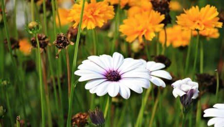 ekologia, liść, natura, trawa, lato, kwiat, ogród, roślina, kwiat
