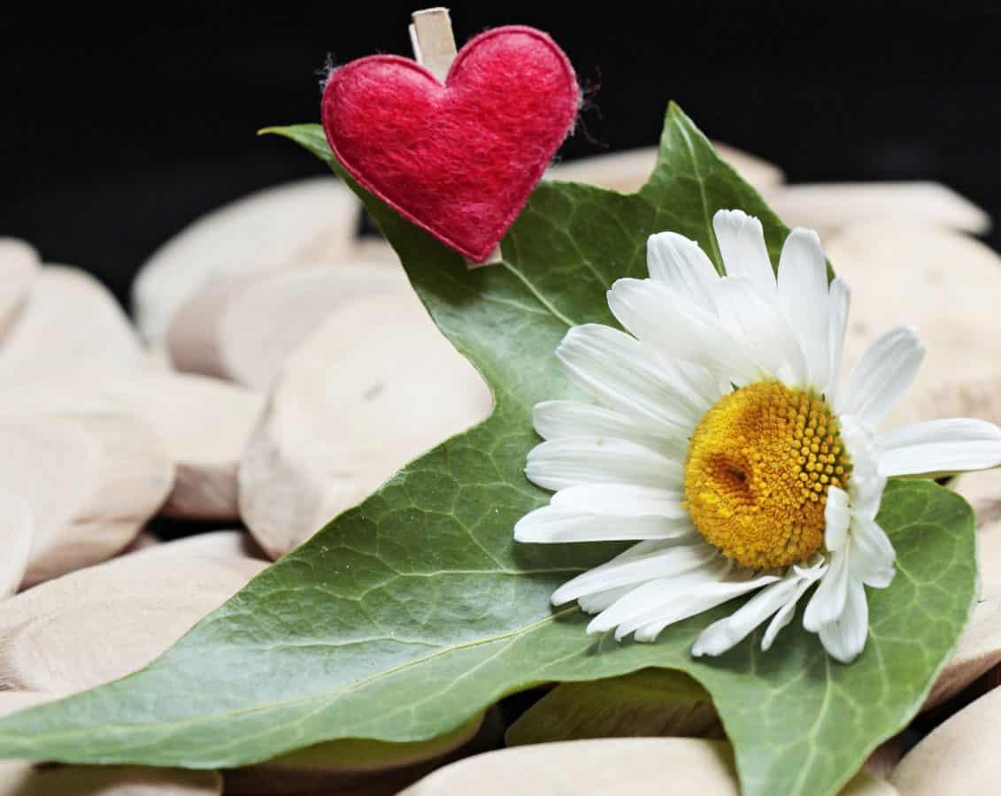 summer, nature, flower, leaf, petal, pink, blossom, plant