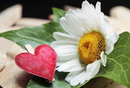 nature, leaf, flower, petal, plant, garden, summer, blossom