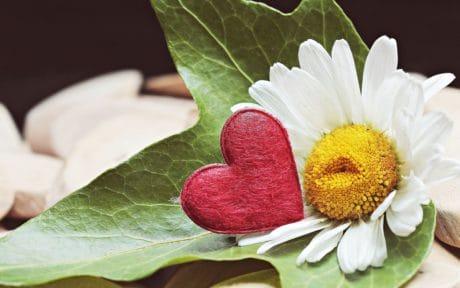 Stillleben, Herz, Blatt, Natur, Blume, Blütenblätter, Pflanze, Sommer, Garten, Herz