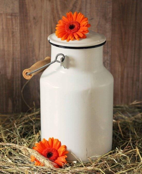 still life, food, organic, hay, flower, material, object